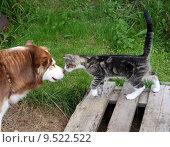 Купить «animal garden play game pet», фото № 9522522, снято 13 декабря 2018 г. (c) PantherMedia / Фотобанк Лори