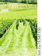 Купить «vineyards around the village of Hunawihr, Alsace, France», фото № 9547130, снято 21 июля 2019 г. (c) PantherMedia / Фотобанк Лори