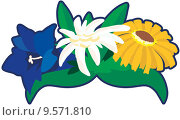 Купить «plant tradition edelweiss arnica gentian», фото № 9571810, снято 26 июня 2019 г. (c) PantherMedia / Фотобанк Лори