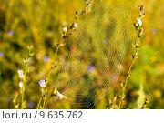 Паутина в траве. Стоковое фото, фотограф Антон Глущенко / Фотобанк Лори