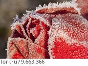 Купить «plant flower winter blossom ice», фото № 9663366, снято 4 апреля 2020 г. (c) PantherMedia / Фотобанк Лори