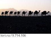 Купить «silhouette caravan camels ahmed ela», фото № 9714106, снято 18 ноября 2017 г. (c) PantherMedia / Фотобанк Лори