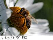 Купить «blossom bloom insect pollen bee», фото № 9751182, снято 6 июля 2020 г. (c) PantherMedia / Фотобанк Лори