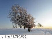 winter cold snow black forest. Стоковое фото, фотограф Klaus Ulrich Müller / PantherMedia / Фотобанк Лори