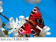 Купить «   the butterfly , apple-tree flower», фото № 9865734, снято 25 апреля 2018 г. (c) PantherMedia / Фотобанк Лори
