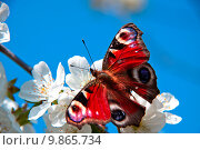 Купить «   the butterfly , apple-tree flower», фото № 9865734, снято 22 января 2018 г. (c) PantherMedia / Фотобанк Лори
