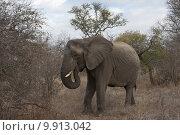 Купить «nature animal horizontal wild africa», фото № 9913042, снято 22 октября 2018 г. (c) PantherMedia / Фотобанк Лори