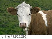 Купить «looking view look meadow cattle», фото № 9925290, снято 19 сентября 2019 г. (c) PantherMedia / Фотобанк Лори