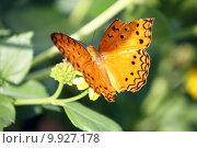 Купить «Butterfly with broken wing», фото № 9927178, снято 18 июня 2019 г. (c) PantherMedia / Фотобанк Лори