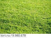 Купить «Green grass texture macro selective focus», фото № 9980678, снято 25 апреля 2019 г. (c) PantherMedia / Фотобанк Лори
