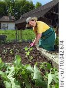 Купить «Grandmother planting vegetables», фото № 10042674, снято 16 июня 2019 г. (c) PantherMedia / Фотобанк Лори