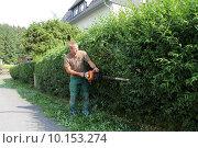 Купить «cut privet hedge», фото № 10153274, снято 27 марта 2019 г. (c) PantherMedia / Фотобанк Лори