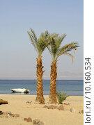 Купить «palm trees on beach resort, red sea sinai, egypt», фото № 10160534, снято 26 июня 2019 г. (c) PantherMedia / Фотобанк Лори