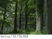 Купить «Majestic English Woodland», фото № 10176954, снято 21 мая 2019 г. (c) PantherMedia / Фотобанк Лори