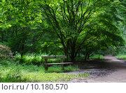 Купить «Empty Park Bench in Wooded Park», фото № 10180570, снято 21 мая 2019 г. (c) PantherMedia / Фотобанк Лори