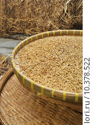 Купить «Pile paddy and Rice Harvesting», фото № 10378522, снято 22 июля 2019 г. (c) PantherMedia / Фотобанк Лори