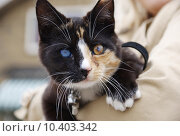 Купить «eyes cat paw unequal pussycat», фото № 10403342, снято 25 июня 2019 г. (c) PantherMedia / Фотобанк Лори
