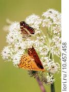 Купить «Orange butterflys vertical», фото № 10457458, снято 22 июля 2019 г. (c) PantherMedia / Фотобанк Лори