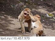Купить «anger hit monkey beat slap», фото № 10457970, снято 26 мая 2019 г. (c) PantherMedia / Фотобанк Лори