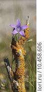 nature plant flower environment decorative. Стоковое фото, фотограф asray Laleike / PantherMedia / Фотобанк Лори