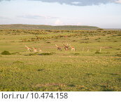 Купить «animal safari kenya giraffe mara», фото № 10474158, снято 22 июля 2019 г. (c) PantherMedia / Фотобанк Лори