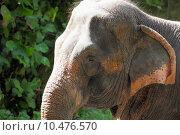 Купить «elephant », фото № 10476570, снято 24 мая 2018 г. (c) PantherMedia / Фотобанк Лори