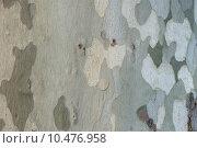 Купить «background nature tree backdrop grey», фото № 10476958, снято 22 июля 2019 г. (c) PantherMedia / Фотобанк Лори