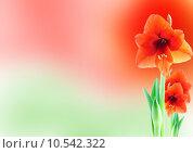 Купить «amaryllis background», фото № 10542322, снято 5 июня 2020 г. (c) PantherMedia / Фотобанк Лори