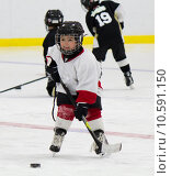 Купить «Little boy playing ice hockey», фото № 10591150, снято 23 мая 2018 г. (c) PantherMedia / Фотобанк Лори
