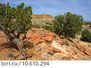 Купить «Treasures of New Mexico», фото № 10610294, снято 20 июня 2019 г. (c) PantherMedia / Фотобанк Лори