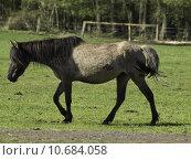 Купить «wild horses in münsterland», фото № 10684058, снято 24 февраля 2019 г. (c) PantherMedia / Фотобанк Лори