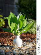 Blooming Lily of the valley in white vase outdoor. Стоковое фото, фотограф Zdeněk Malý / PantherMedia / Фотобанк Лори