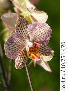 Купить «Freaky orchid pink and yellow », фото № 10751470, снято 15 октября 2019 г. (c) PantherMedia / Фотобанк Лори