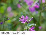 Купить «insect bee nectar honeybee bienen», фото № 10784126, снято 20 сентября 2019 г. (c) PantherMedia / Фотобанк Лори