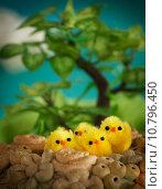 Купить «Easter chicks», фото № 10796450, снято 20 ноября 2018 г. (c) PantherMedia / Фотобанк Лори