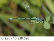 Купить «nature close up macro insect», фото № 10838626, снято 20 сентября 2019 г. (c) PantherMedia / Фотобанк Лори