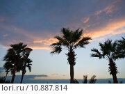 Купить «palm trees in sunset sky», фото № 10887814, снято 23 февраля 2019 г. (c) PantherMedia / Фотобанк Лори