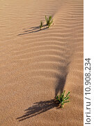 Купить «Two Plants in the Sand in the Desert», фото № 10908234, снято 10 декабря 2018 г. (c) PantherMedia / Фотобанк Лори