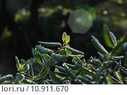 Купить «plant leaves ripe foliage branches», фото № 10911670, снято 15 октября 2019 г. (c) PantherMedia / Фотобанк Лори