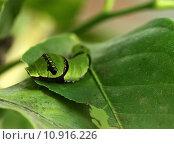 Купить «close up head macro insect», фото № 10916226, снято 20 сентября 2019 г. (c) PantherMedia / Фотобанк Лори