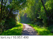 Купить «Misterious shady green alley with trees in the park in Fulda, Hessen, Germany», фото № 10957490, снято 23 марта 2019 г. (c) PantherMedia / Фотобанк Лори