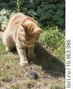 Купить «Cat and mouse in garden», фото № 10963986, снято 6 декабря 2019 г. (c) PantherMedia / Фотобанк Лори