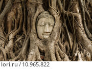 Купить «Buddha head in banyan tree at Ayutthaya», фото № 10965822, снято 23 сентября 2018 г. (c) PantherMedia / Фотобанк Лори