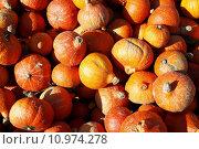 Купить «agriculture harvest farming pumpkin cucurbits», фото № 10974278, снято 18 февраля 2019 г. (c) PantherMedia / Фотобанк Лори