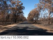 Купить «After the Bushfire», фото № 10990002, снято 27 марта 2019 г. (c) PantherMedia / Фотобанк Лори