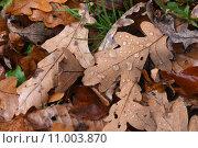 Купить «season autumn leaves fall foliage», фото № 11003870, снято 15 октября 2019 г. (c) PantherMedia / Фотобанк Лори