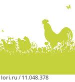 Купить «agriculture farm farming chicken chick», иллюстрация № 11048378 (c) PantherMedia / Фотобанк Лори