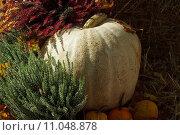 Купить «garden autumn fall halloween october», фото № 11048878, снято 18 февраля 2019 г. (c) PantherMedia / Фотобанк Лори