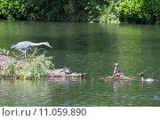 Купить «bird birds turtle heron tortoise», фото № 11059890, снято 6 июля 2020 г. (c) PantherMedia / Фотобанк Лори