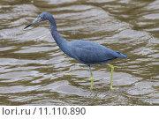 Купить «nature wildlife bird birds florida», фото № 11110890, снято 6 июля 2020 г. (c) PantherMedia / Фотобанк Лори